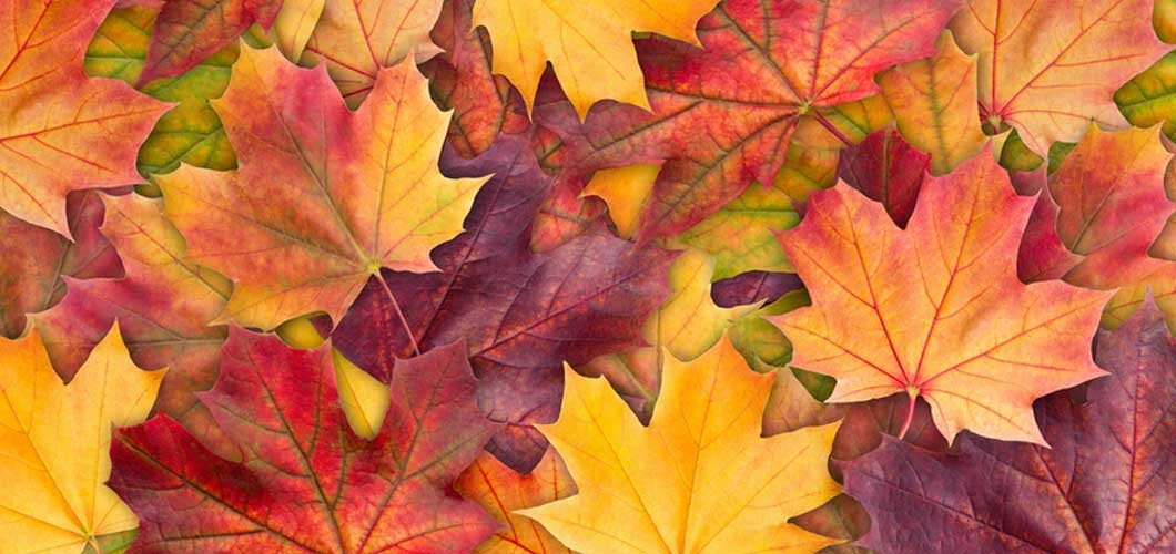 Why Do Leaves Change Color in the Fall?