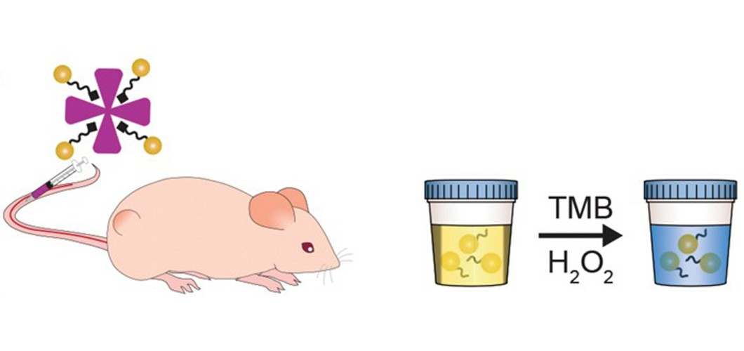 image of mouse and urine samples for cancer testing