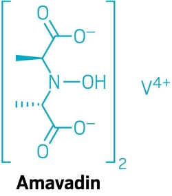 Amavadin, relatively large amounts of vanadium in a coordination complex found in mushrooms