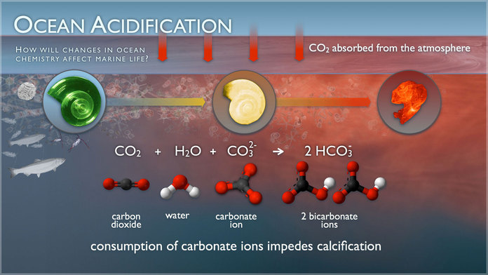How changes in oceans acidification affect marine life